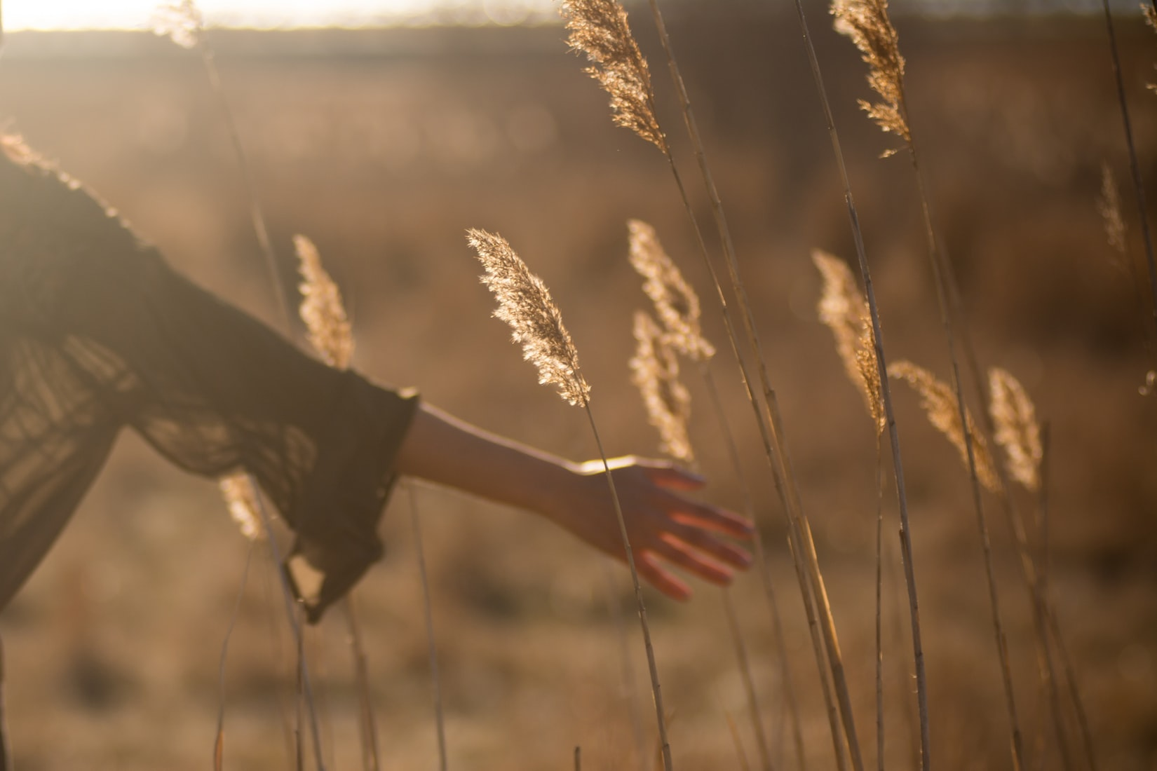Woman holding tall yellow grass during sunset