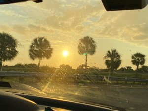 Tampa vacation - sunset by palm trees