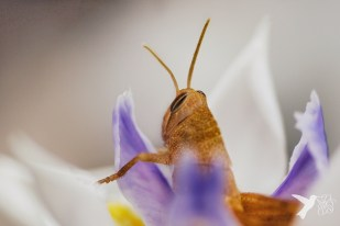 Lounging Grasshopper 3