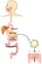 digesting