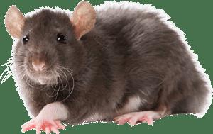 acworth animal removal, acworth animal control, wildlife control