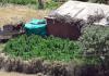 Cannabisfelder in der Türkei: In den letzten vier Monaten wurden in der Provinz Diyarbakır Drogen im Wert von 2,7 Milliarden Türkische Lira konfisziert.