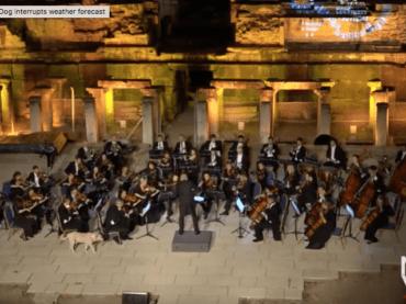 Wiener Kammerorchester in Izmir: Hund sorgt für Begeisterung