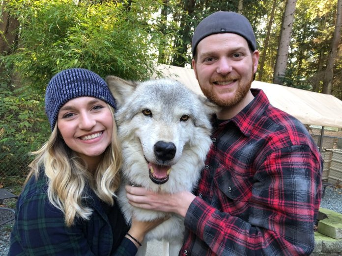 This Wolf Encounter In Washington Is A Once-In-A-Lifetime Experience