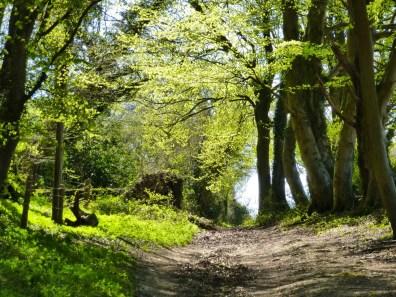 Cheriton Wood Footpath