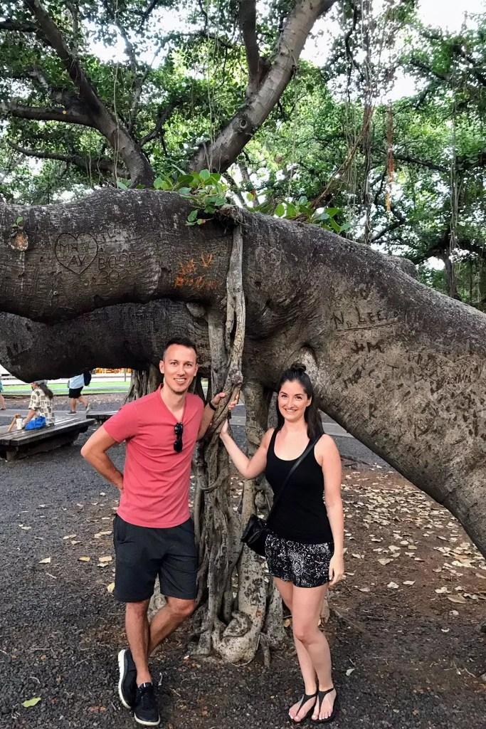 The Big Banyan Tree Lahaina