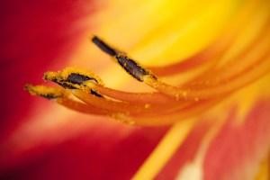 art floral 13