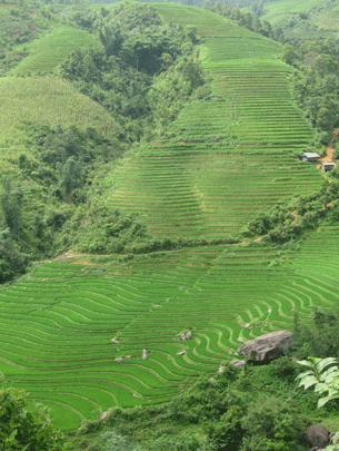 Thửa ruộng 121 bậc thang ở thôn Vù Lùng Sung