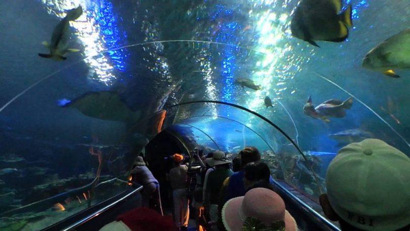 Đi ngắm cá trong hầm thủy cung trên đảo Vinpearl Nha Trang