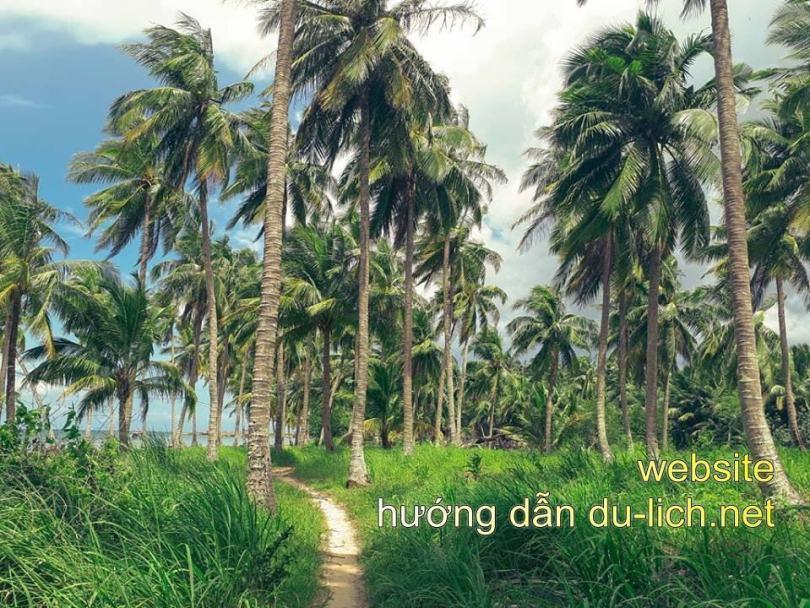 Trên hòn Móng Tay có rất nhiều dừa, cảnh đẹp thanh bình, hoang dã