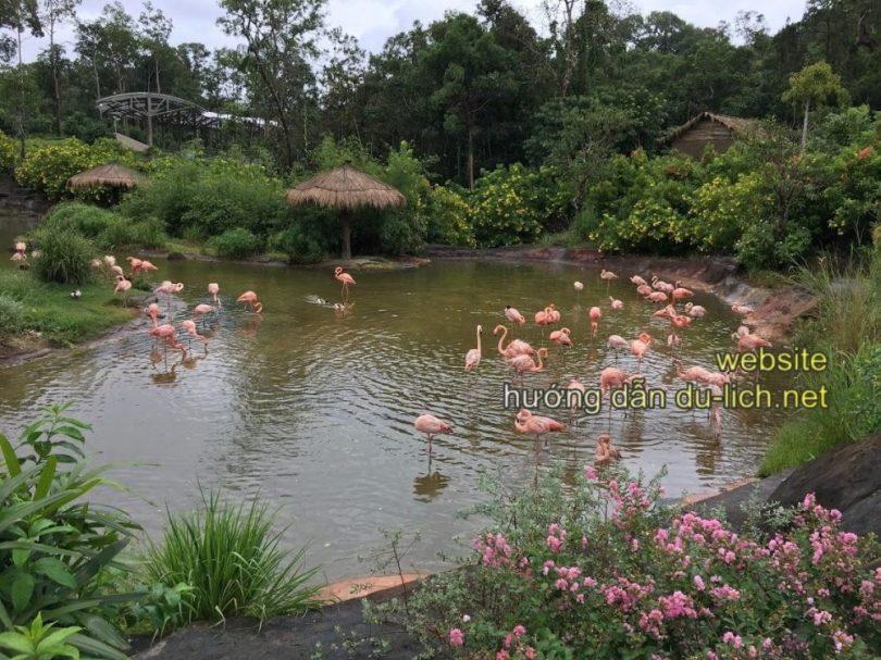 Kinh nghiệm đi Safari Phú Quốc (Review): Bầy hồng hạc và chim cò nói chung