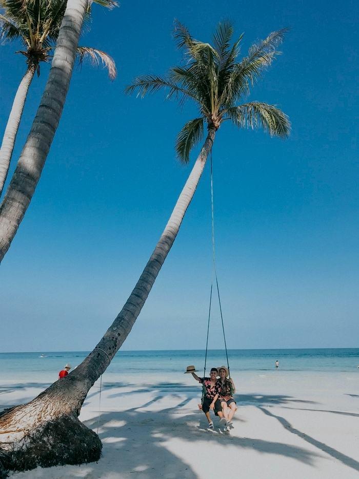 Hình ảnh cây dừa huyền thoại (1)