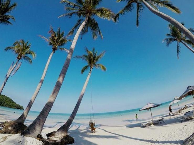 Hình ảnh cây dừa huyền thoại ở Hòn Thơm
