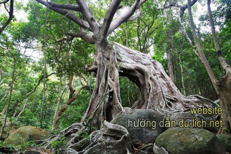 Hình ảnh Nhất Lâm Thủy Trang Trà (1)
