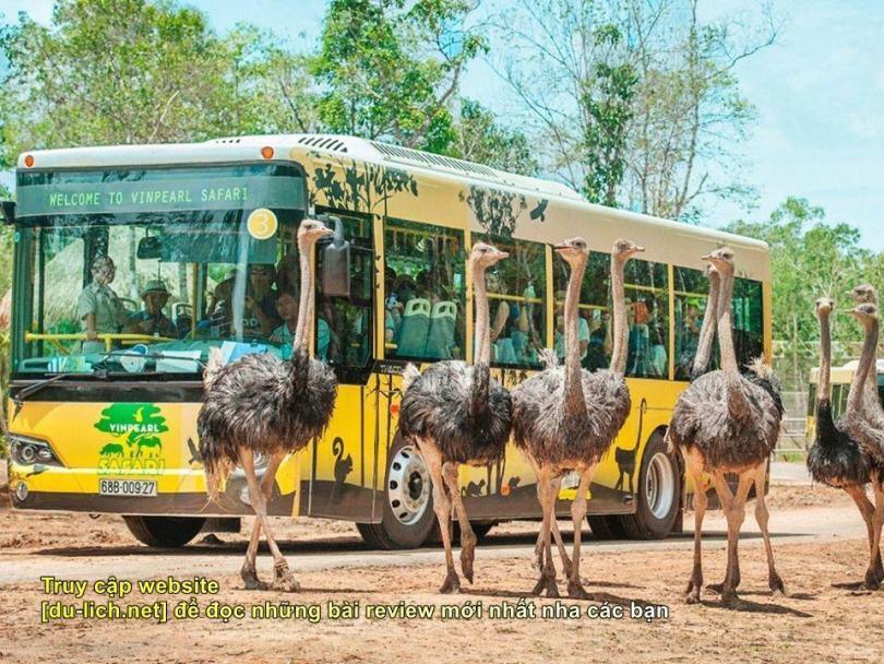 Đi tham quan Safari - mọi người lên 1 cái xe bus để đi sâu vào bên trong vườn thú hoang