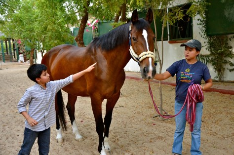 Touch and feel horses at Desert Palm Per Aquum