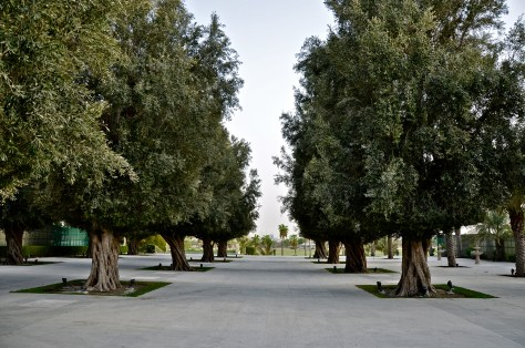 Olive Tree - space used for events and functions