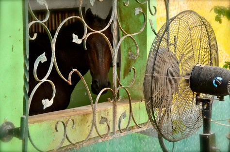Cooling the horses