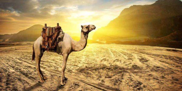 evening desert safari tour