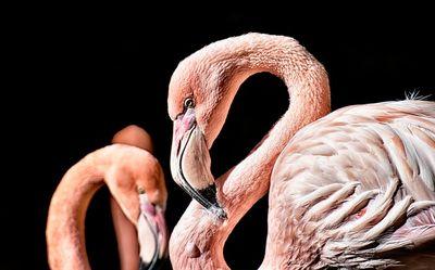 Flamingó rezervátum Dubaiban