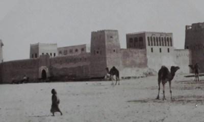Cammelli, le navi del deserto