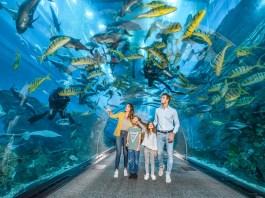 Dubai Aquarium - Aquaruim Tunnel