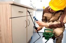 Pest Control Dubai – Best Pest Control Companies in Dubai