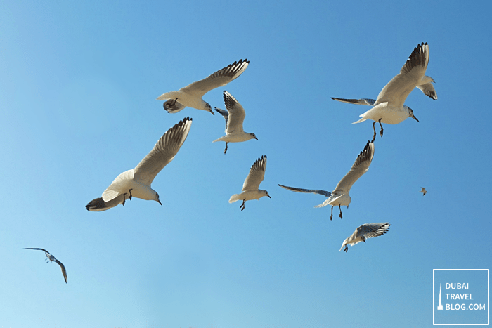 birds at The Beach JBR
