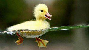 Graduate student duck is ducky.