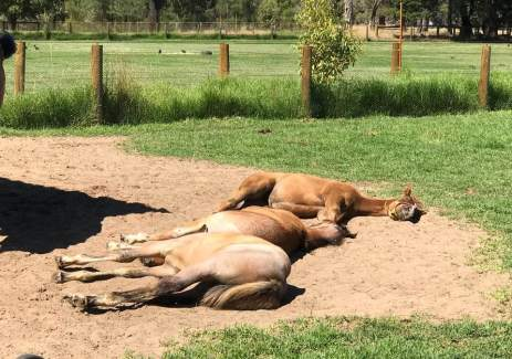 Morning Naps at Duck Pool Farm