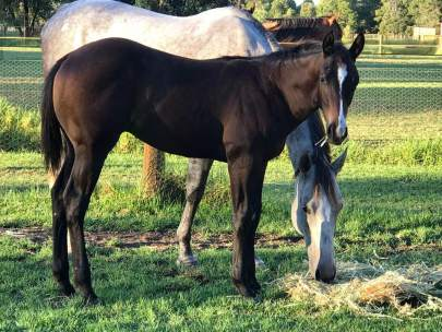 """""""Will"""", Winnies Willy x Sheza Little Lazy. We love the Winnies Willy babies, they are growing out to be perfection. Will is owned by Louise Blake."""