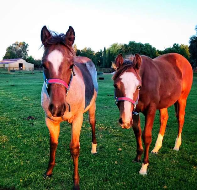 """Full sisters """"Sweetheart"""" and """"Lilly"""
