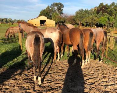 Horses at Duck Pool Farm