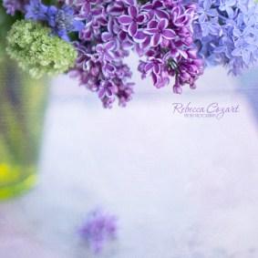FB Lilacs Square