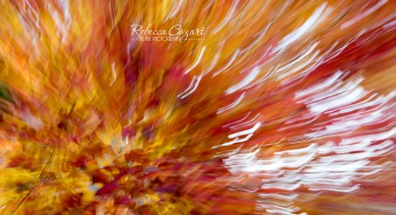 abstract-leaves-17