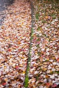 leaves-37