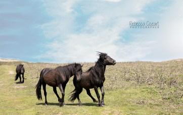 HORSES - Three horses 1