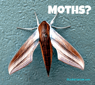 Troubled by moths in your kitchen? #pantrymoths #bugs #ad