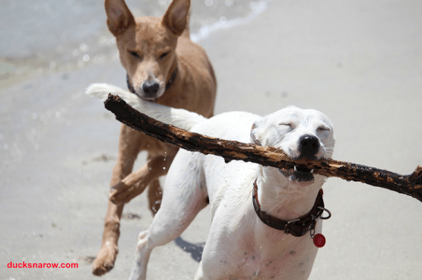 fetch; stick; dog play