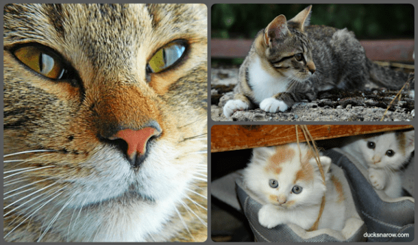 preschool craft, about cats for preschoolers