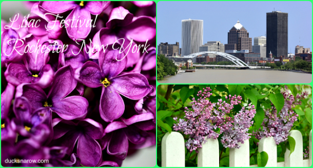 ROC, lilacs, Rochester, spring, Mother's Day, family fun