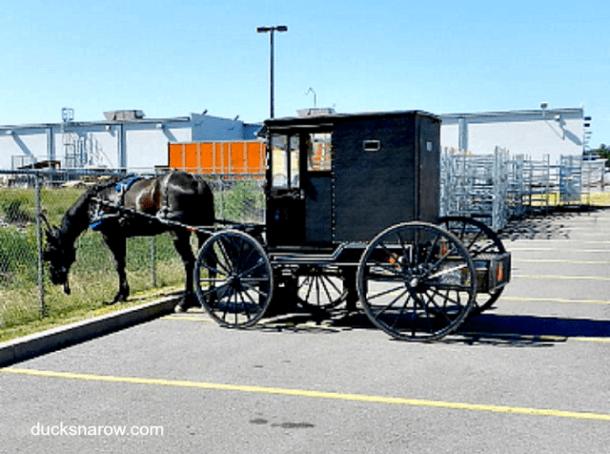 horses, travel, old fashioned transportation