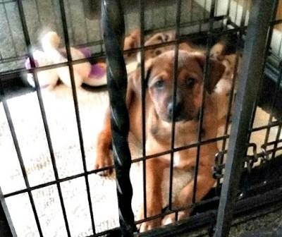 pets, dog training, house breaking dogs, boxer, cattledog, bulldog