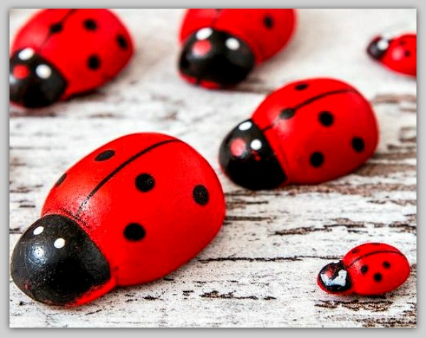 Paint rocks to look like lady bugs! #crafts