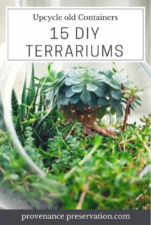 15 clever DIY terrariums