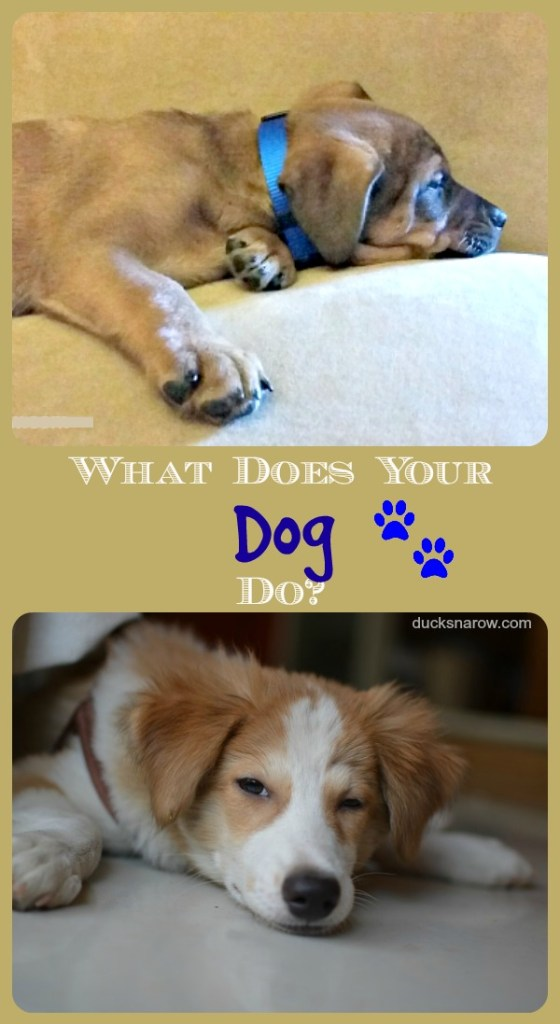 Find out what your pet is doing while you are away #ad