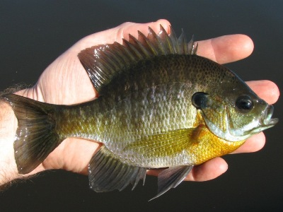 The first miracle was 7 sunfish! #faith