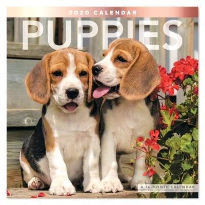 Puppy calendar #ad