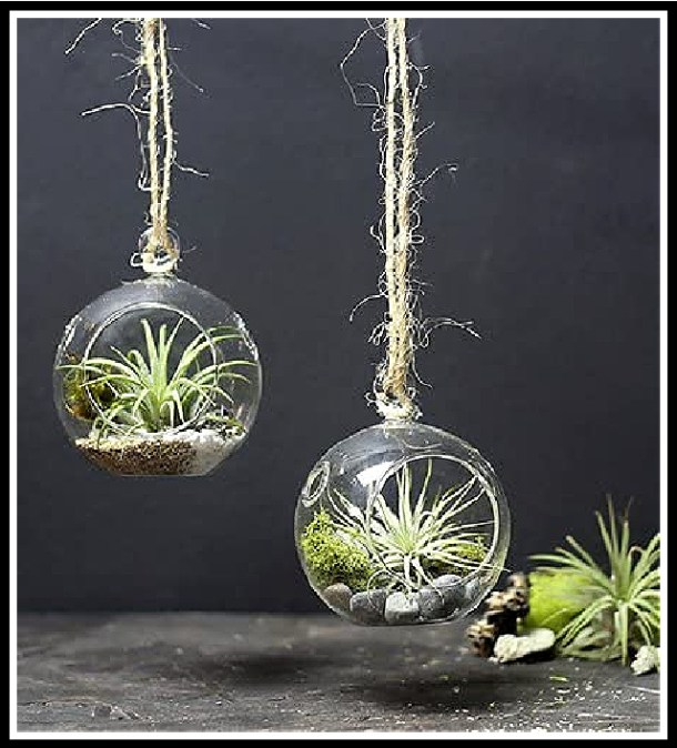 Tropical air plants in hanging glass terrariums #ad