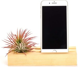 Air plant cell phone wooden holder #ad